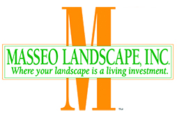 masseo logo color